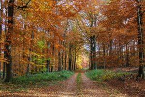 Dokumentation Wald @ HoT